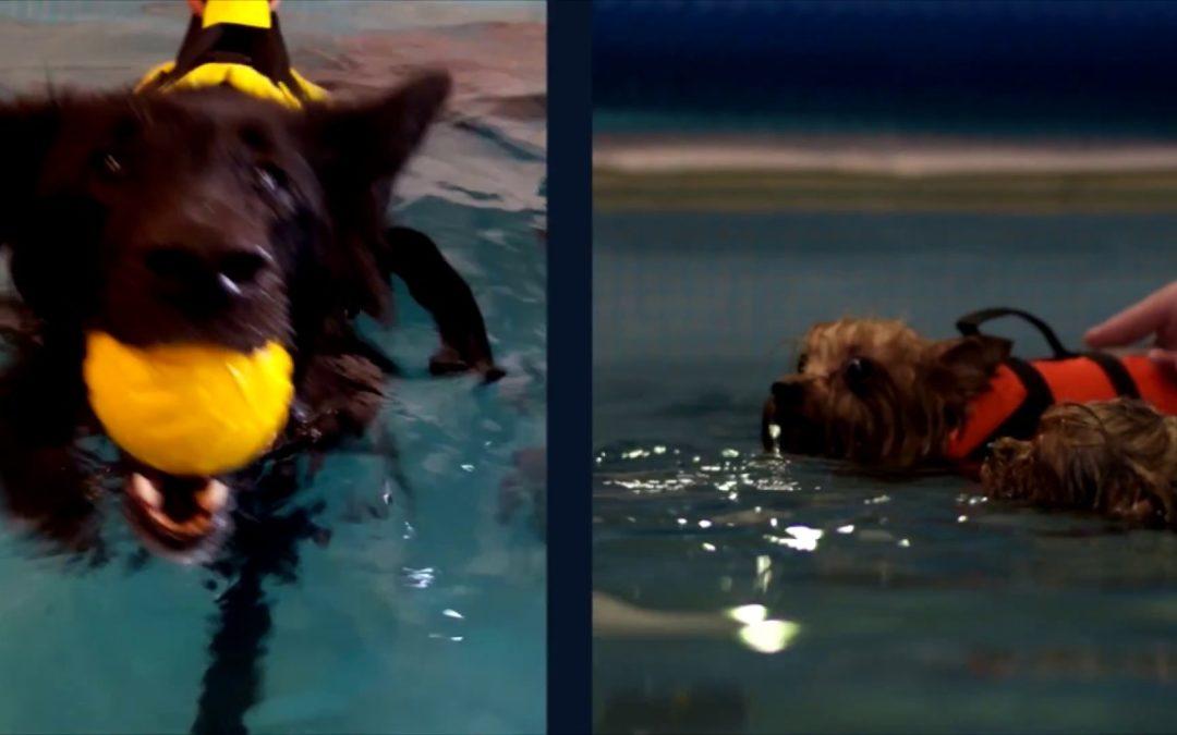 Elkészült hidroterápiás videónk is! :)…
