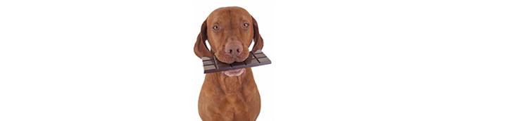Kutyákra, cicákra mérgező növények és ételek