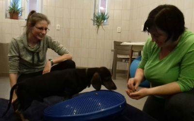 Mazsola porckorongsérvvel volt műtve. A műtét után a hátsó végtagok teljesen le …