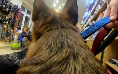 ki volt mindig is kíváncsi rá, hogy milyen egy kutya szemszögéből az élet? :) új…