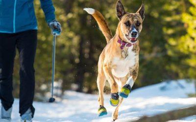Sokak kutyusa imád a hóban bulizni. ️ Ám előfordulhatnak balesetek, főleg a fels…