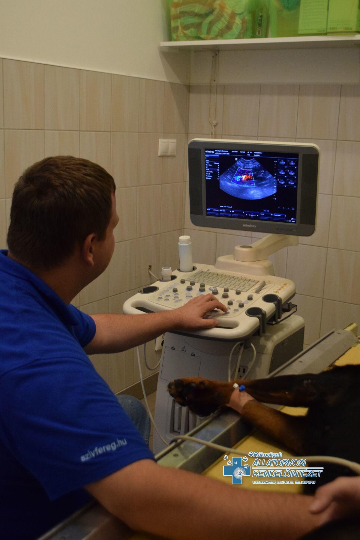 Ultrahangos vizsgálat - képekben